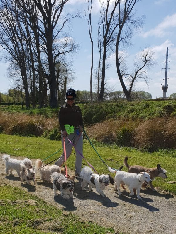 Sunday walk with 9 dogs - a record for me!