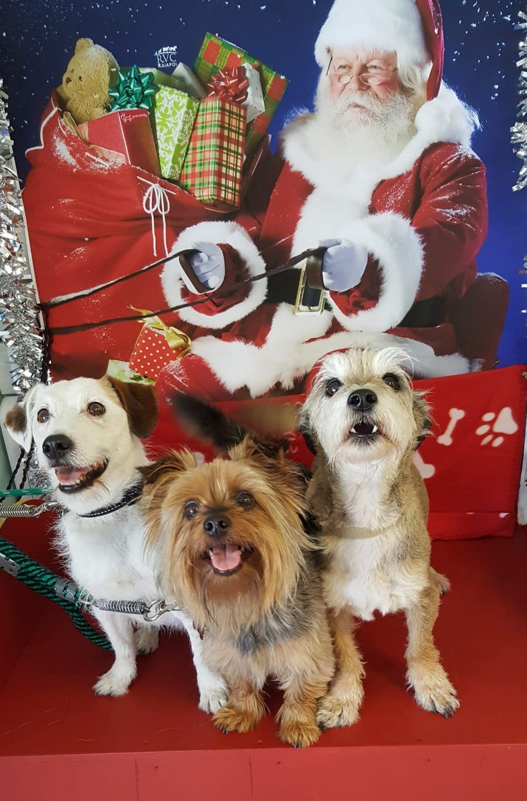 Happy Holiday Greetings from Rocky & Family!!