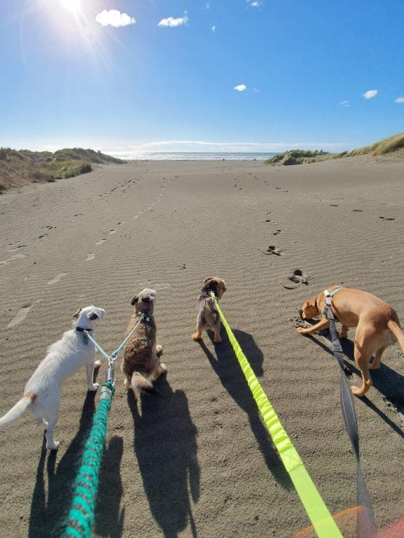 Walking the dogs on Pines Beach, Kaiapoi.