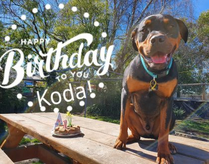 Koda turns 1 today and we're celebrating!